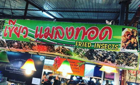 Fried Insects anyone?