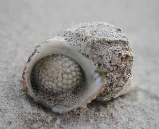 bremer bay shell