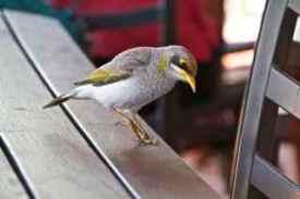 alice bird 1