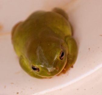 col-frog-1