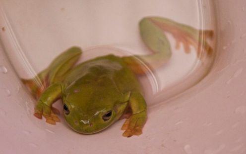 col-frog