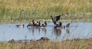 kak-wetlands-9