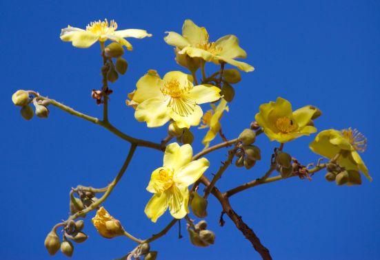 croydon-flower-2