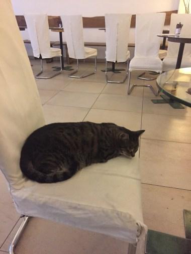 Vienna - Cafe Niko