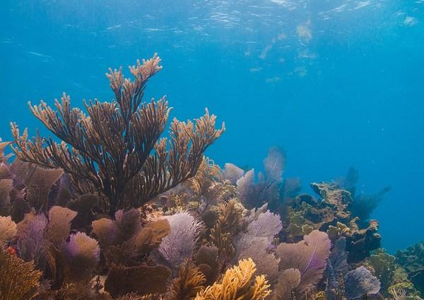 Diving at Molasses Reef