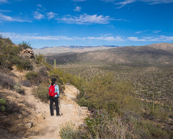 Saguaro National Park East