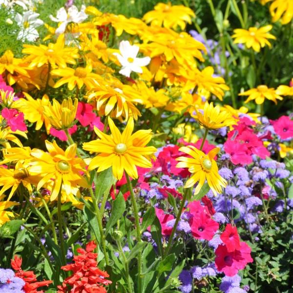 Flowers, Flowers, Everywhere