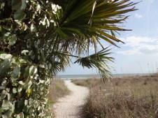 View of dunes