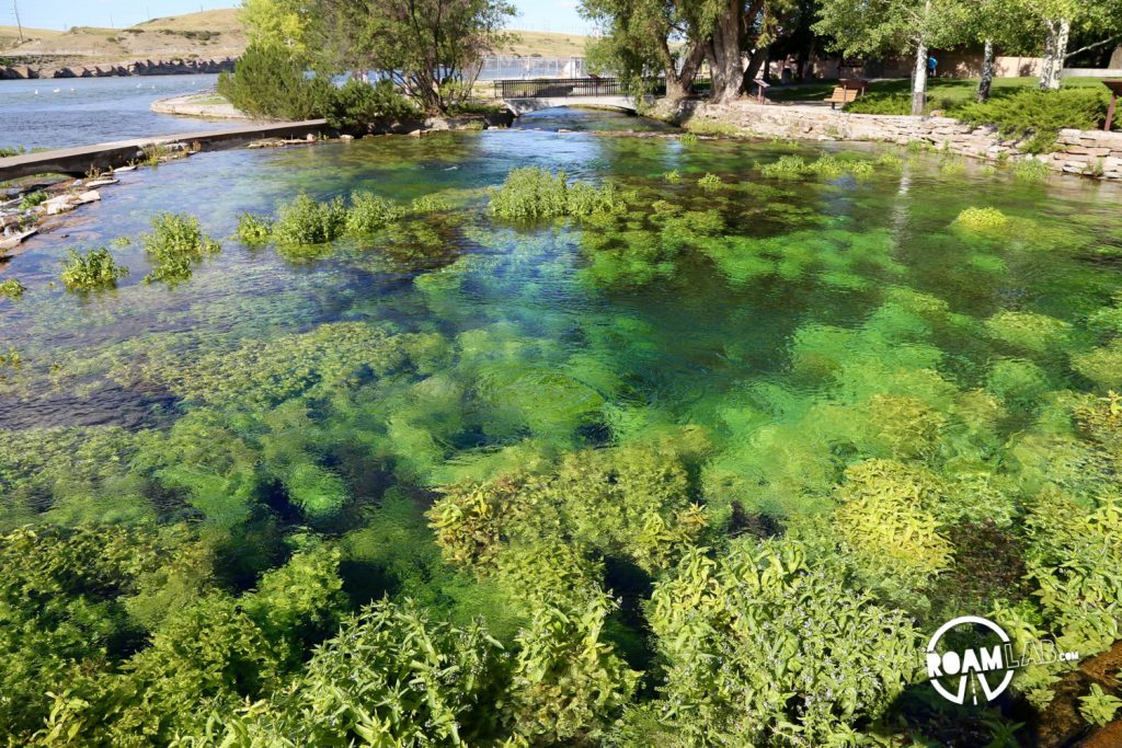 Aquatic plants flourish in the clear water of Great Springs.