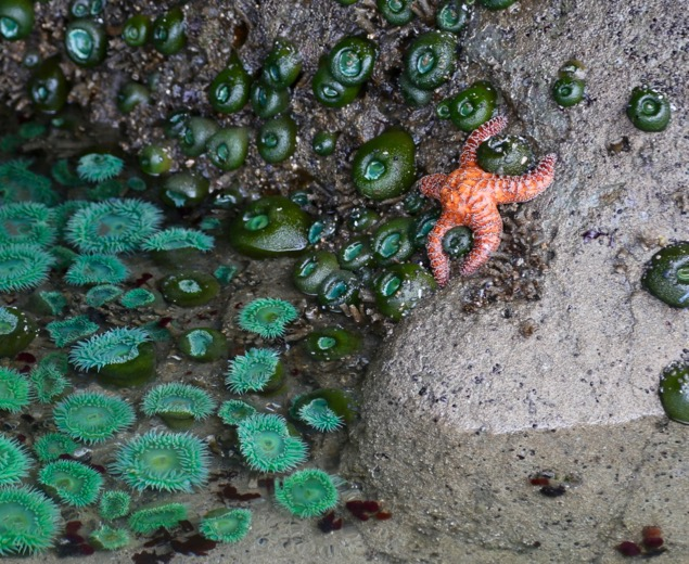 Olympic National Park Tide Pools