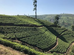 Tea country for days.