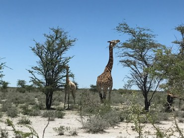 Our lunch date with giraffes. We ate different things.