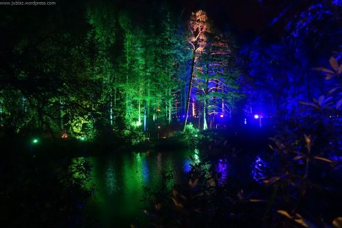 Enchanted Forest_17