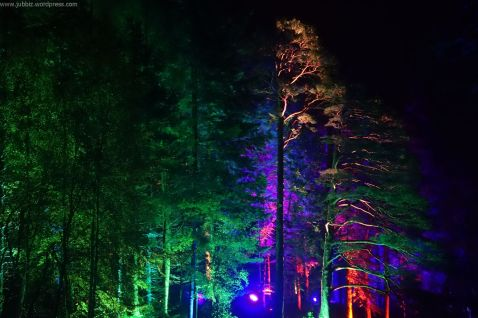 Enchanted Forest_23