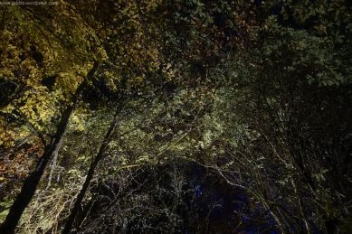 Enchanted Forest_45