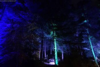 Enchanted Forest_53