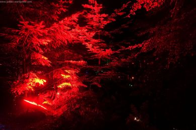 Enchanted Forest_6