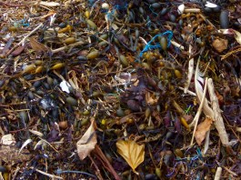 Seaweed treasure trove
