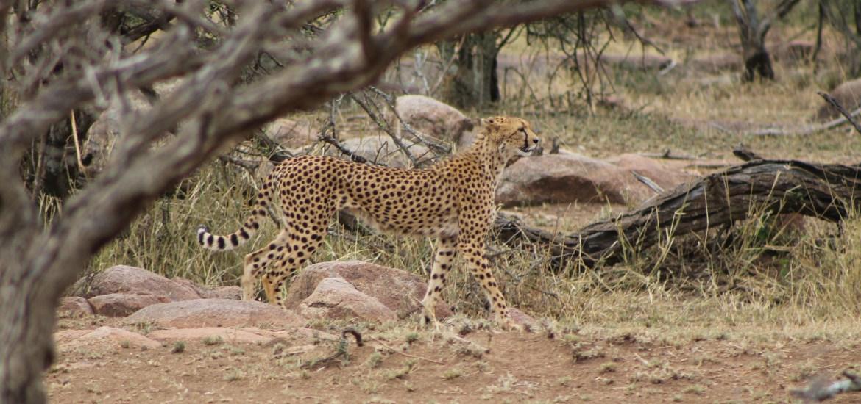 The Serengeti- Photo Essay
