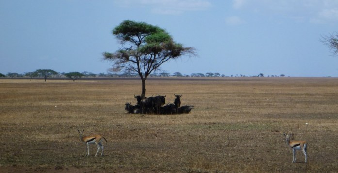 A Visual Journey Through the Serengeti- Photo Essay
