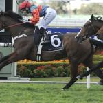 Blurred Vision at Rosehill