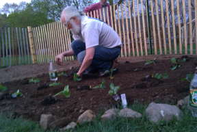 Alan at one with brassicas