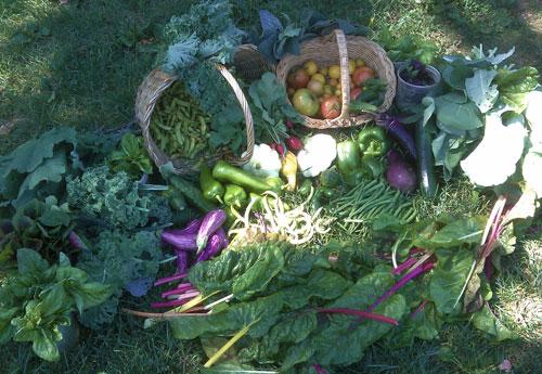 August 28 2010 harvest