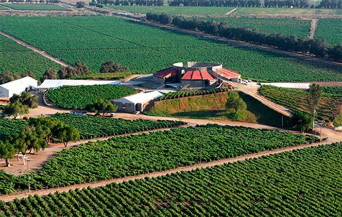 bodegas - Estos son los mejores viñedos mexicanos que no puedes perder de vista