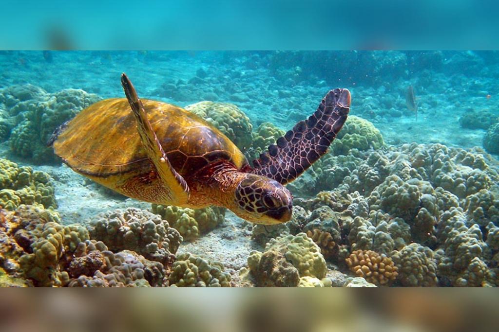 buceo3 1024x683 - Los lugares más bonitos de México para sumergirte en el océano
