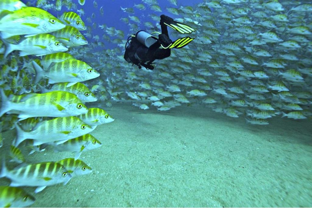 buceo4 1024x683 - Los lugares más bonitos de México para sumergirte en el océano