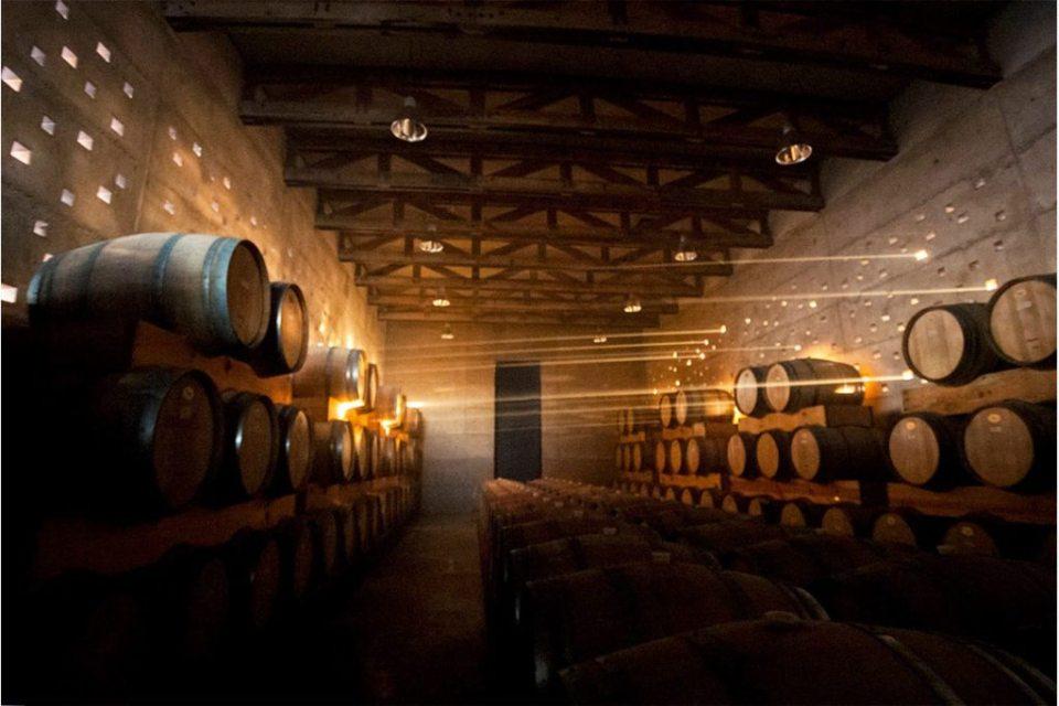 cuna de tierra 1024x683 - Estos son los mejores viñedos mexicanos que no puedes perder de vista
