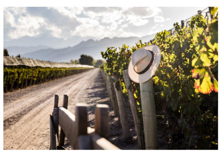 image002 - Estamos en el mes del Malbec y Terrazas de los Andes lo celebra de esta manera