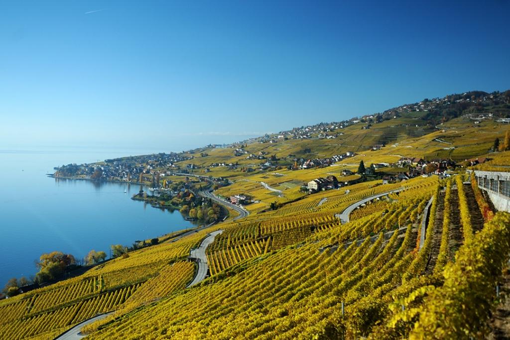 Lausanne Vineyard 1024x683 - Sabemos cuál es la ciudad más acogedora de Suiza