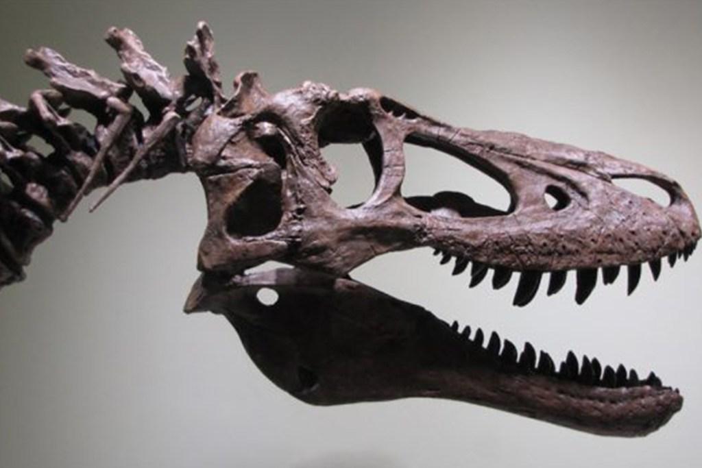 Un Baby T-Rex original podría ser tuyo vía eBay si tienes 2.95 mdd