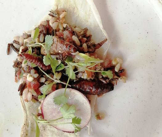 Un menú ancestral, la Temporada de Bichos que debes probar