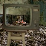 Así es Chernóbil vista desde un dron