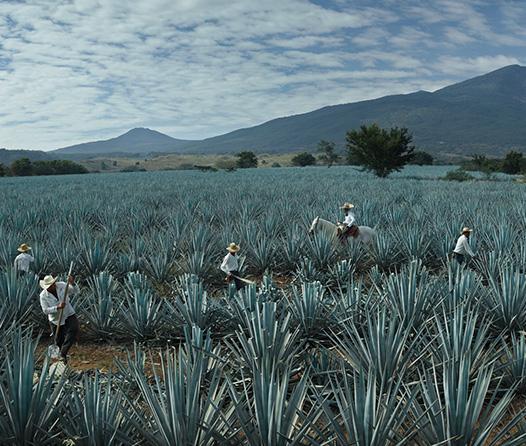 Protegido: Reserva de la Familia José Cuervo, el verdadero lujo del tequila