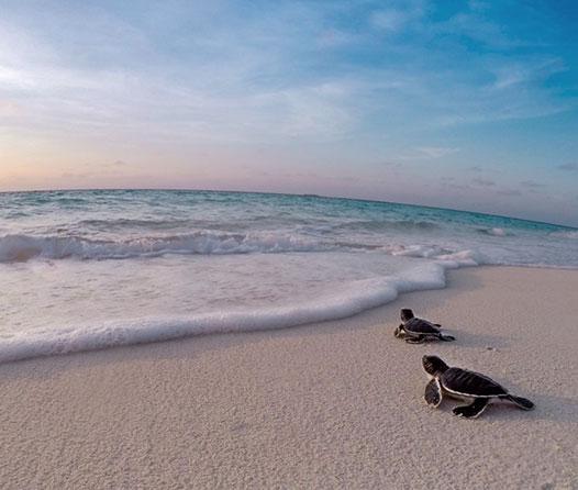 ¿Dónde ver tortugas en la Riviera Maya? Aquí tenemos la respuesta