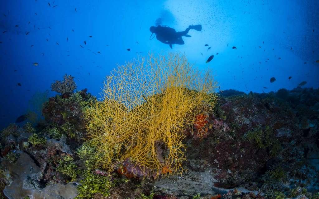 Ahora puedes aprender a tomar fotos bajo el agua dentro de este lujoso resort