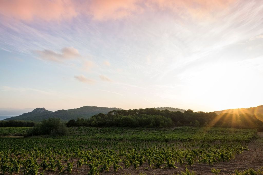 Así son los nuevos vinos orgánicos de la Maison Chanel