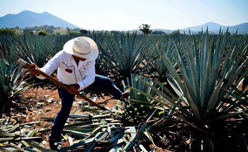 Tres cócteles con mezcal que enaltecen el sabor de Matatlán, la capital de la bebida