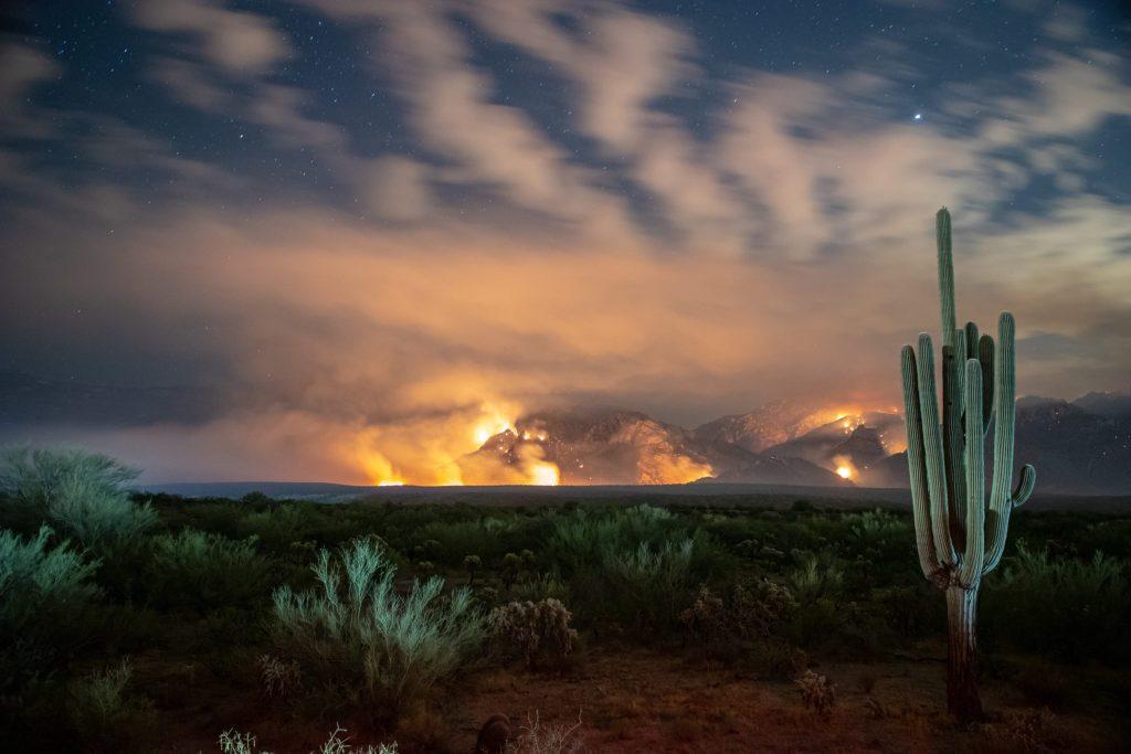 ¿Por qué la gastronomía de Tucson es una joya para los paladares más exigentes?