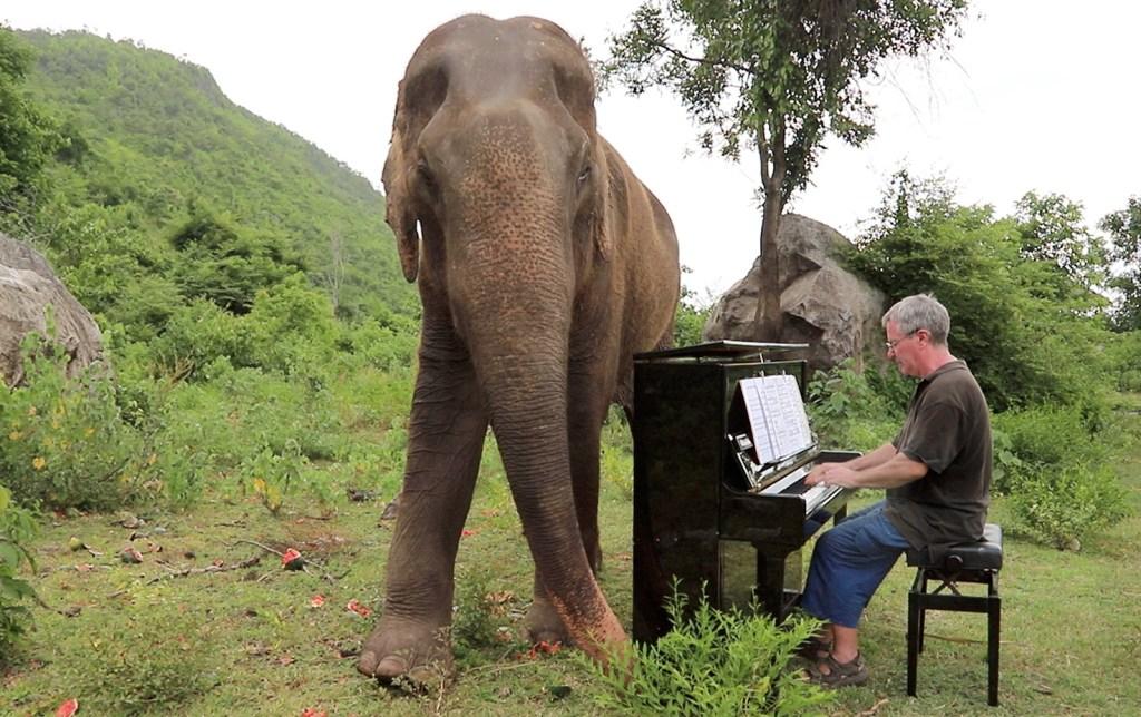 Concertista interpreta música clásica a elefantes rescatados en Tailandia ¡no querrás perdértelos!