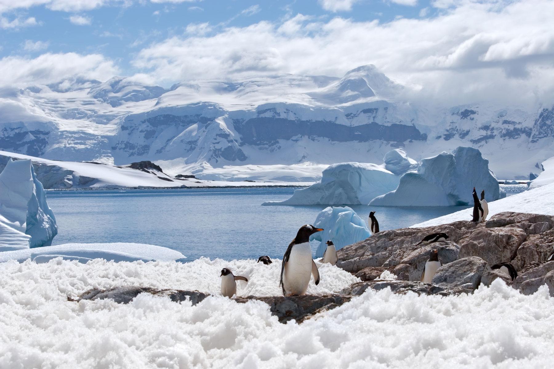 La Antártida se va a derretir, pero con tu amor si decides casarte ahí en San Valentín