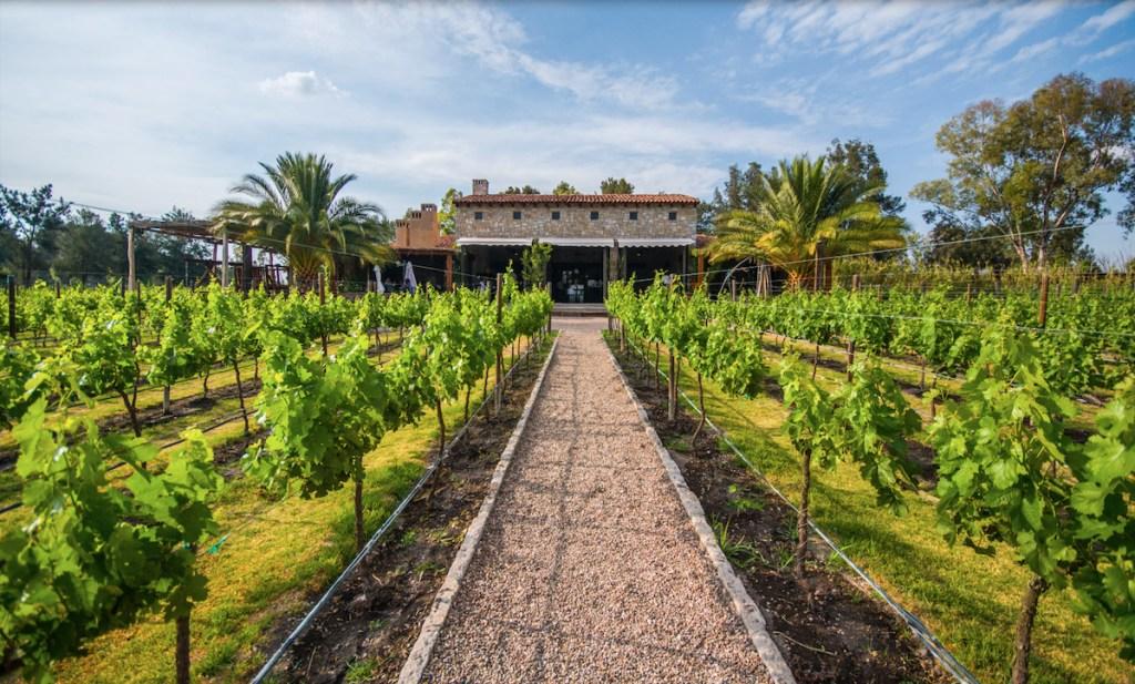 Disfruta de una experiencia de lujo, al aire libre, en los viñedos de La Santísima Trinidad en Guanajuato