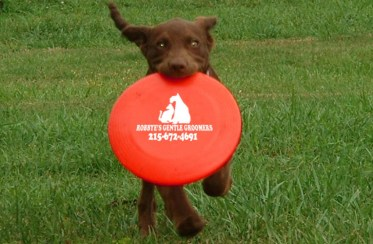 cropped-frisbeebest-copy.jpg