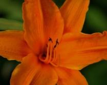 © COPYRIGHT PHOTO ROBERT hamburg neustadt planten un blomen