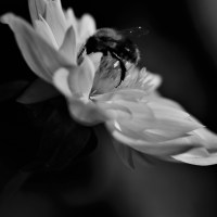 weekly photo challenge tiny
