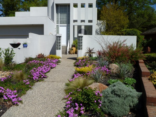 modern home and drought tolerant landscape