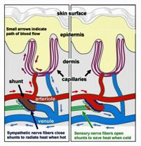 Nuevo estudio ratifica que existen causas biológicas en la Fibromialgia (1/3)